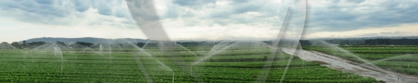 Watering fields panorama