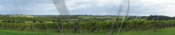 Fresh winery panorama