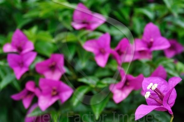 Sharp flower in corner with blurring background