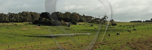 Horses at farmland panorama