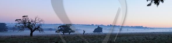 Trees in fog panorama