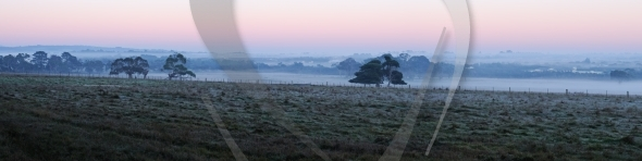 Trees on farmland in morning