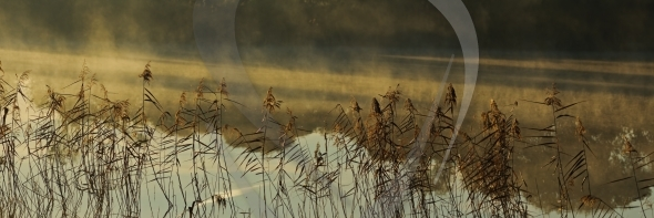 Reeds and fog patches