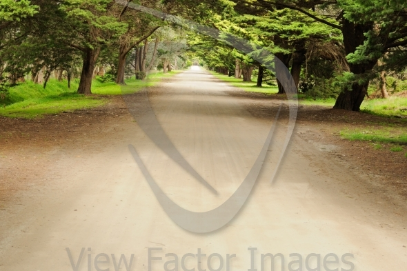 Road in pine forest