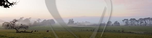Pastoral farm panorama