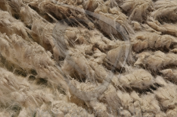Closeup to raw wool